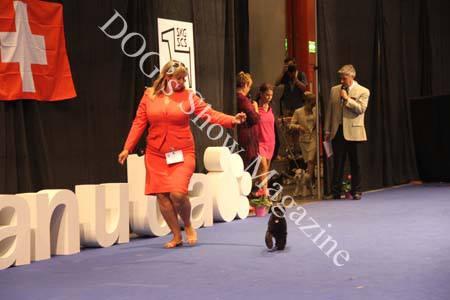 Pippa en el European Dog Show 2013