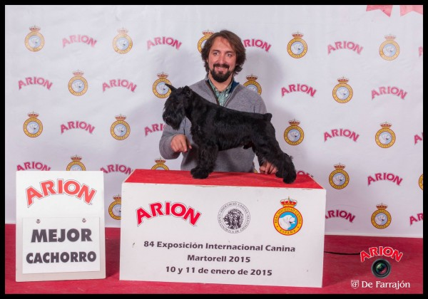 Mejor Cachorro en Exposición Internacional de Martorell 2015