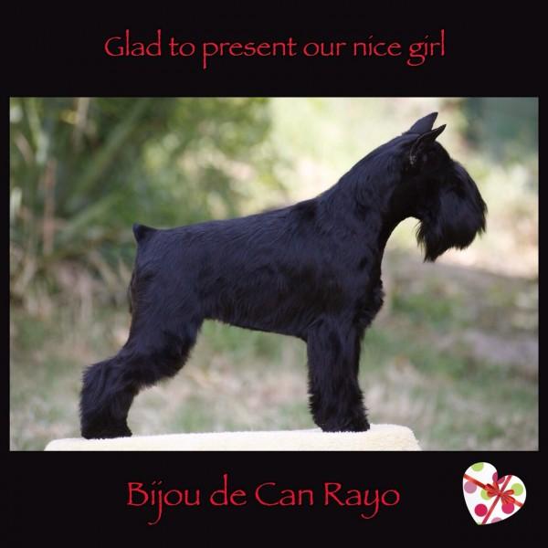 Bijou de Can Rayo