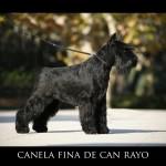 Canela Fina de Can Rayo 2