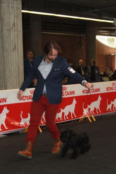UZI Latoya del Casa di Vita en el ring - Girona 2016