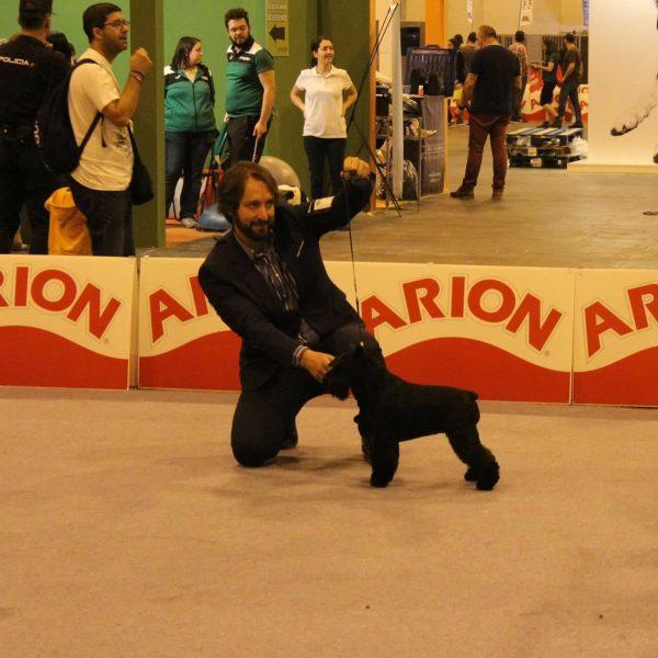 Canela Fina de Can Rayo en la exposición internacional de Madrid 2016