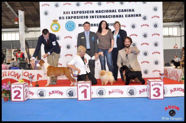 Nacional Martorell 2016 ASTRA FORTUNATA SHOWY SHINE, 3 BIS cachorros