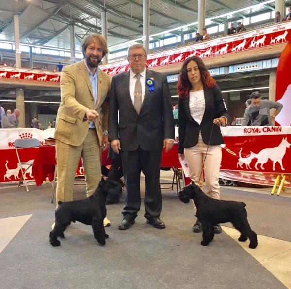 Uzi y Canela CAC CACIB MR BOB y BOS en exposición internacional de Girona 2017