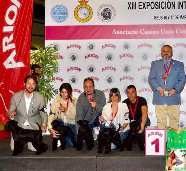 Grupo de cría Can Rayo en Reus 2019 - Schnauzer Miniatura negro