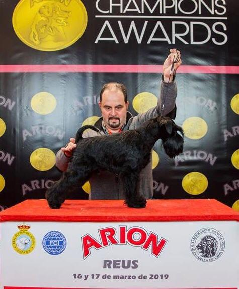 King Power de Can Rayo en Reus 2019 - Schnauzer Miniatura negro