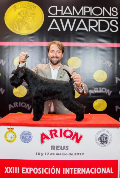 William Wallace de Can Rayo en Reus 2019 - Schnauzer Miniatura negro
